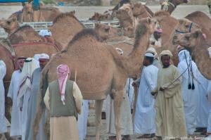 thirsty-qatar-wm